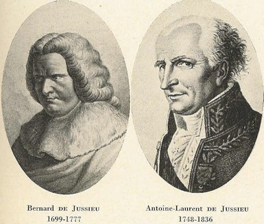 Bernard et Antoine Laurent de Jussieu