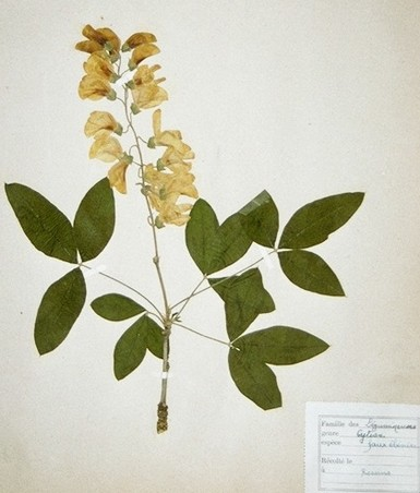 herbier_ancien_low.jpg