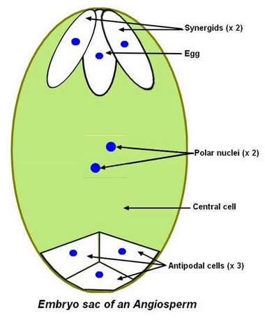 antipodal cells