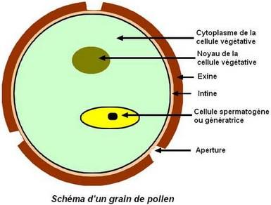 grain_pollen.jpg