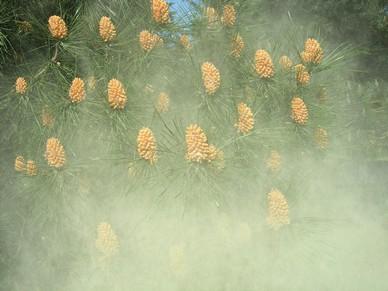 pin_pollinisation.jpg