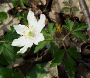 floraisons_printemps4